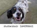 Stock photo dog 164098661