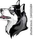 siberian husky   Shutterstock .eps vector #164102684