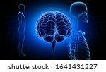 brain head human mental idea... | Shutterstock . vector #1641431227