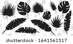 set of palm leaves silhouettes... | Shutterstock .eps vector #1641561517