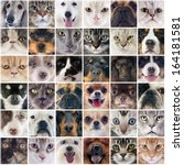 Stock photo group of purebred dogs and cats on a photography montage 164181581
