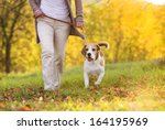 Stock photo senior woman walking her beagle dog in countryside 164195969