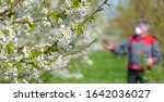 Agricultural Senior Worker In A ...