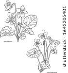 violet flowers hand drawn... | Shutterstock .eps vector #1642205401