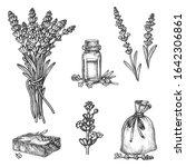 lavender vector sketch... | Shutterstock .eps vector #1642306861