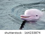 pink dolphins | Shutterstock . vector #164233874