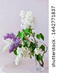 White And Lilac Lilac  A...