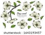 Set Of White Dogwood Flower And ...