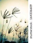 vintage floral grass | Shutterstock . vector #164336609