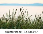 Grass Straw On The Beach In...