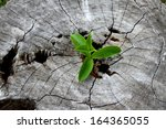 young plant growing on tree... | Shutterstock . vector #164365055