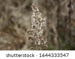 Small photo of This plant describes its self. Standing tall in the harsh cold winds of the winter, letting his white coat keep him warm.
