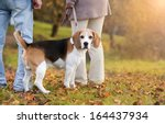 Stock photo senior couple walking their beagle dog in autumn countryside 164437934