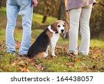 Stock photo senior couple walking their beagle dog in autumn countryside 164438057