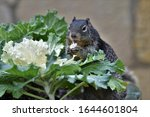Squirrel Eating Flower Of An...