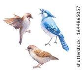 Watercolor Birds Set. Hand...