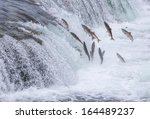 Salmon Jumping Up The Brooks...