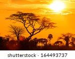 Orange Glow Of An African...
