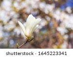 spring background   white... | Shutterstock . vector #1645223341