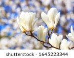 spring background   white... | Shutterstock . vector #1645223344