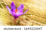 spring background   view of the ... | Shutterstock . vector #1645223347