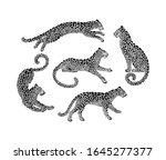 set of jaguar spotted... | Shutterstock .eps vector #1645277377