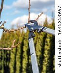 Small photo of Shot of pruning shears used by gardener to prune fruit tree branches