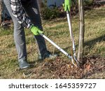 Small photo of Female gardener using pruning shears to prune root sprouts of fruit tree