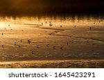 Golden Landscape  Group Of...