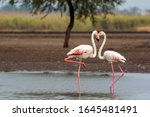 The Kiss   Flamingo Couple...