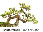 A Close Up Of The Branches Of...