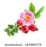 Rose Hips  Rosa Canina  Flower...