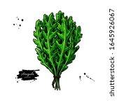 arugula bunch vector... | Shutterstock .eps vector #1645926067