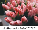 pastel peachy tulips close up... | Shutterstock . vector #1646075797