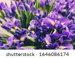purple iris flowers bouquets... | Shutterstock . vector #1646086174