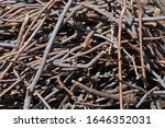 A Heap Of Cut Twigs And Branches