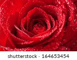 Red Rose With Water Drops On...