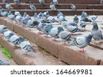 Rock Pigeon On The Stairs