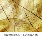 brown foliage texture | Shutterstock . vector #164686445