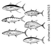 Collection of hand drawn ocean fish - stock vector