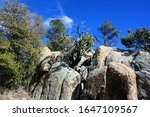 Trees growing out of sheer bedrock at the Community Nature Center in Prescott, Arizona