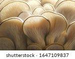 Mushrooms Pattern For Design....