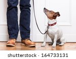 Stock photo dog looking up to owner waiting to go walkies 164733131
