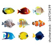 popular tropical fishes on... | Shutterstock .eps vector #164734199