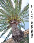 a palm tree growing out from a... | Shutterstock . vector #16474879