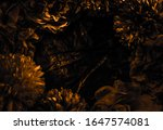 Beautiful Abstract Color Black...