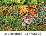 closeup of bright colorful... | Shutterstock . vector #164766509