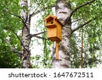 Birdhouse On A Tree With Your...