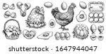 Chicken Eggs Hand Drawn Vector. ...
