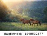 Horse Herd Run In Sunlightwith...